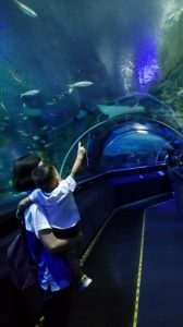 White Lodge visits Aquaria KLCC